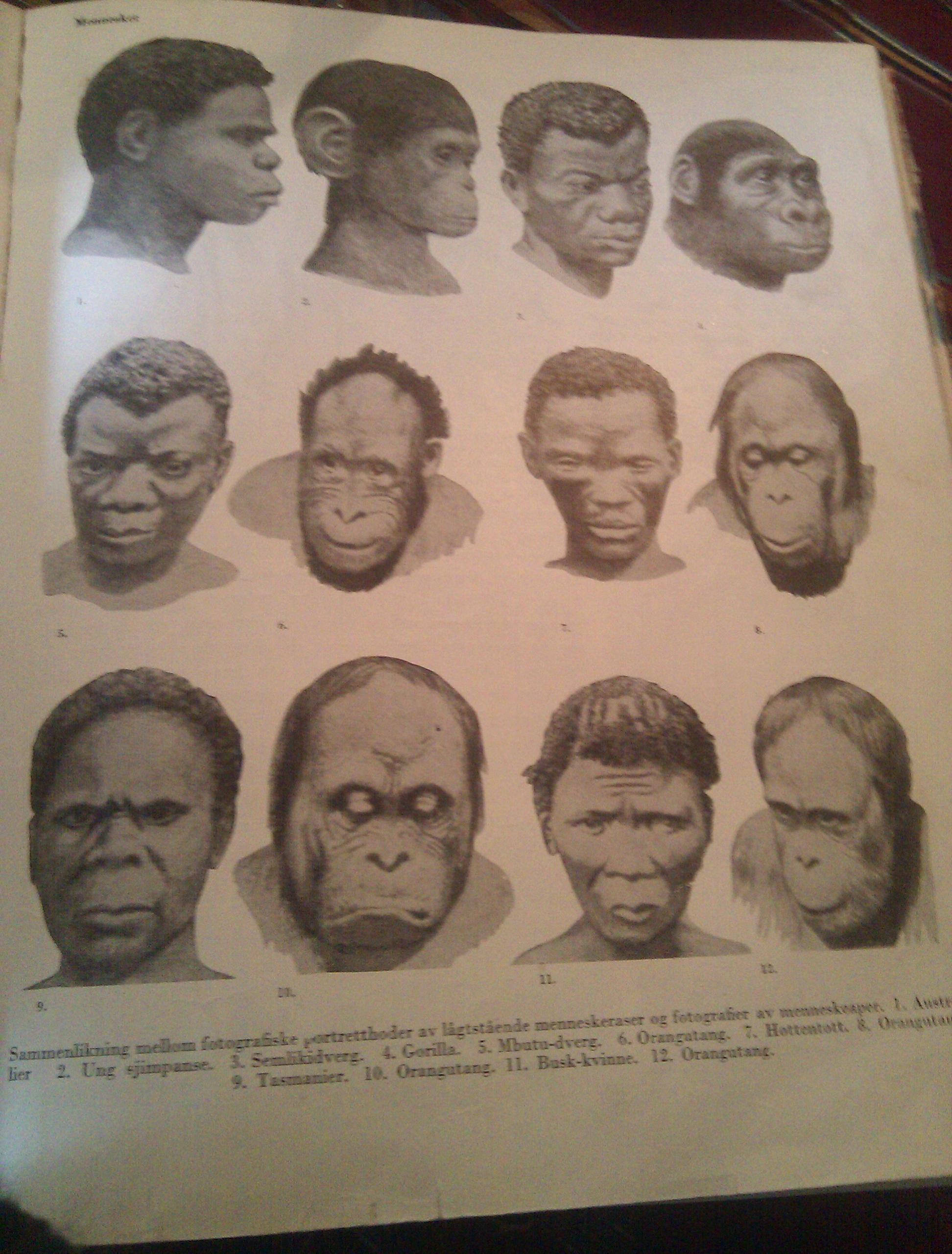 Sammenligning mellom mennesker og aper